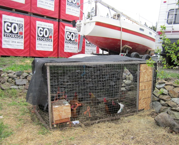 Living the Life: Mobile Hen-Hutch and Weed Control,